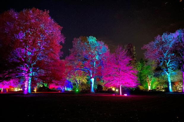 Cameo_illuminated-gardens_Royal-Horticultural-Society_1