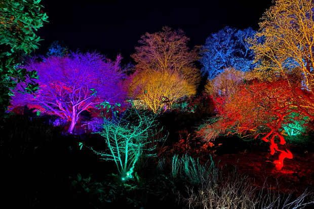 Cameo_illuminated-gardens_Royal-Horticultural-Society_11