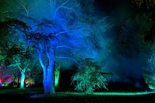 Cameo_illuminated-gardens_Royal-Horticultural-Society_2