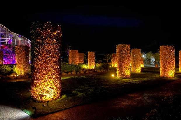 Cameo_illuminated-gardens_Royal-Horticultural-Society_3