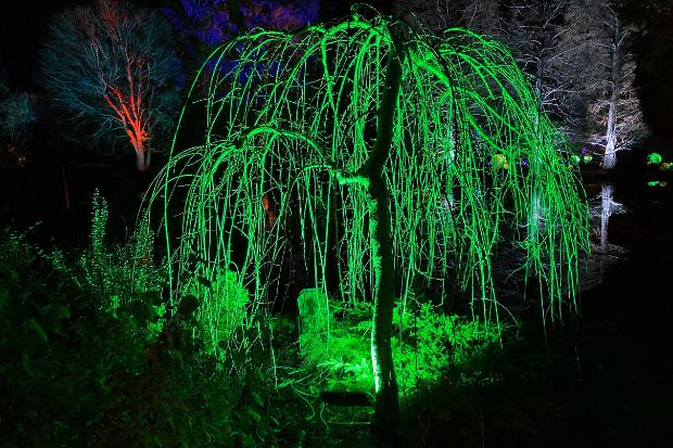Cameo_illuminated-gardens_Royal-Horticultural-Society_6