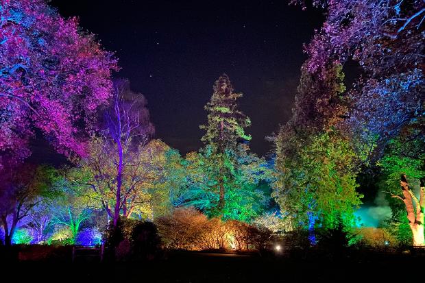 Cameo_illuminated-gardens_Royal-Horticultural-Society_8